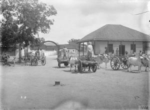 Indian Army Ox Carts. Source: Imperial War Museum